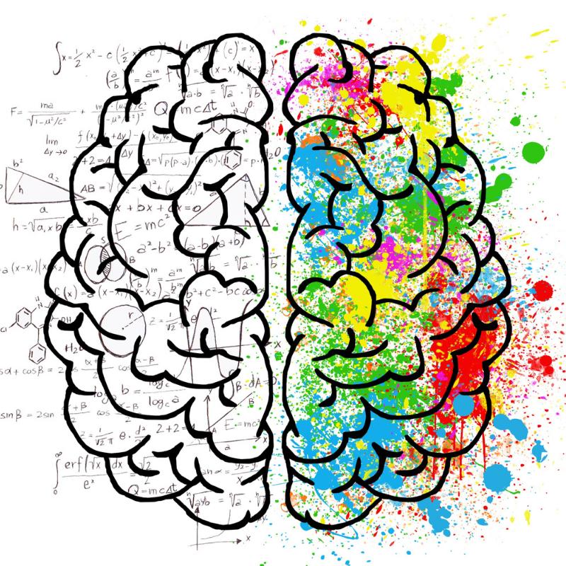 hemisferio cerebral dominante